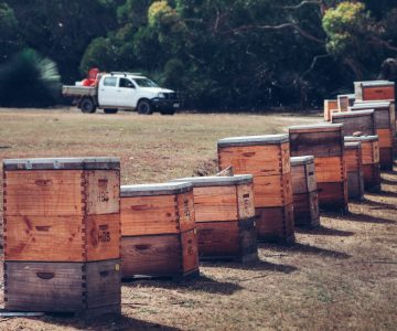 ligurian honey bee hives