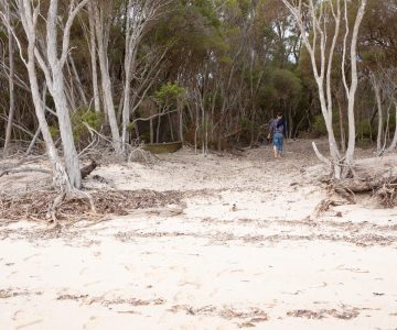 Nepean Bay Kangaroo Island beach olive grove Little Liguria
