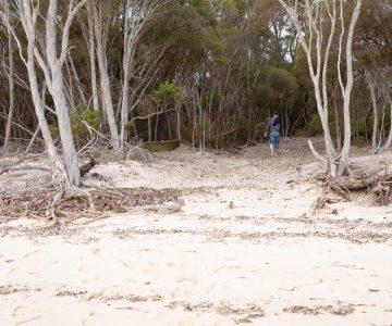 nepean bay kangaroo island beach olive grove little liguria